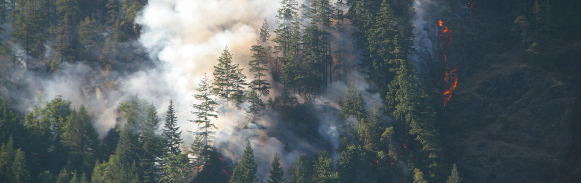 Five Ways to Prevent Forest Fires